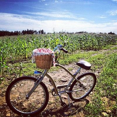summer-bike