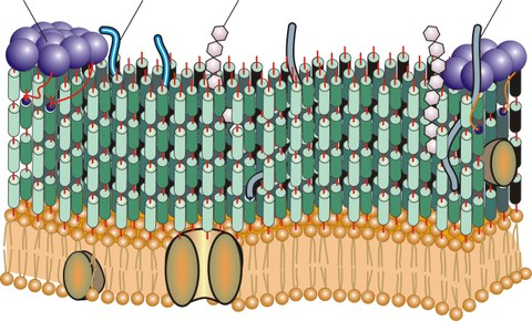 cell-schematics