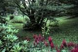 old_bat_garden_s